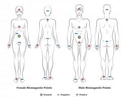 Biofactors